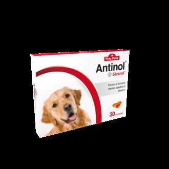 antinol_pies